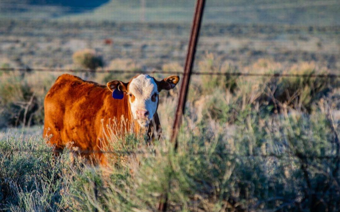 Survey seeks to expose 'dark figure' of farm crime