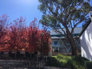 Autumn Trees on campus