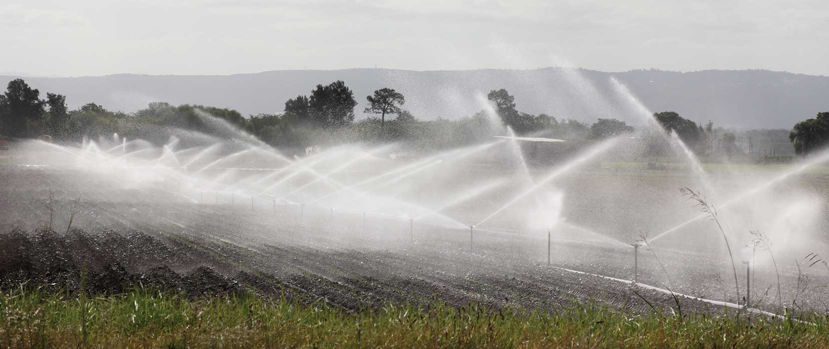Irrigation pipes spraying water across a pasture.