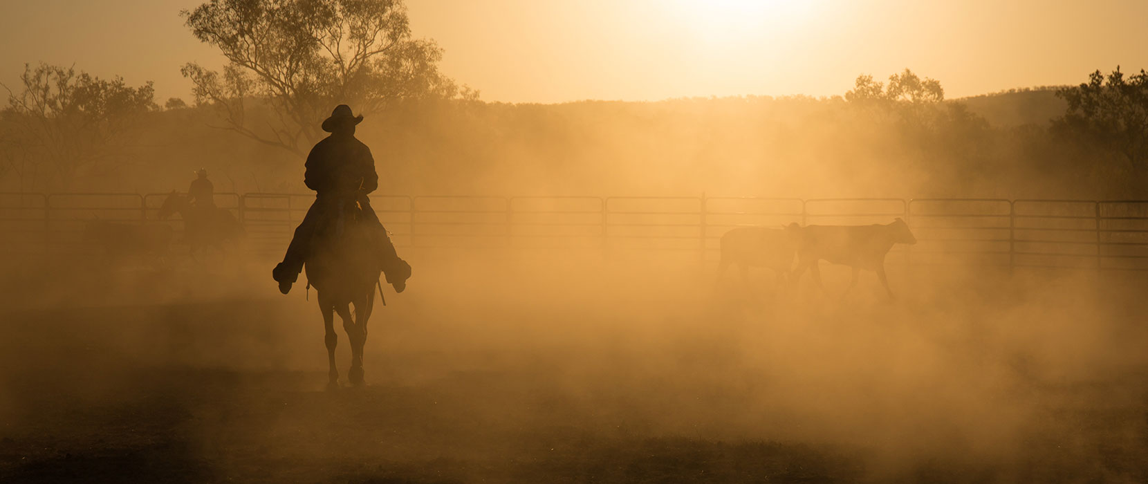 Dusty sunset with a cowboy on a horse mustering cattle.