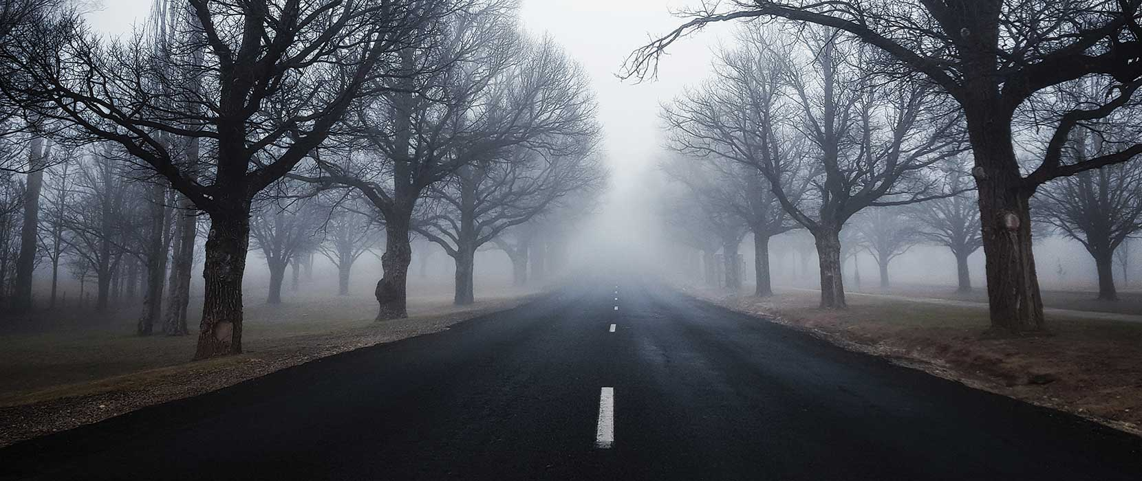 A misty road lined with deciduous trees in winter.