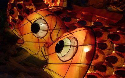 Lessons & Lanterns