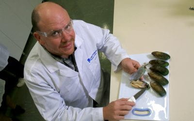 Novel research to study the health benefits of Greenshell™ mussels awarded further funding