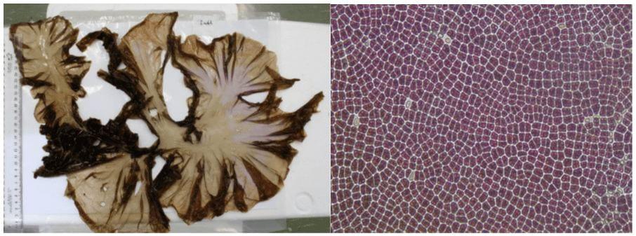 Te Wiki o te Reo Māori – Read about HVN's Māori-led research into karengo