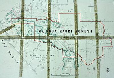 Waipoua Kauri Forestmap, 1908. 5