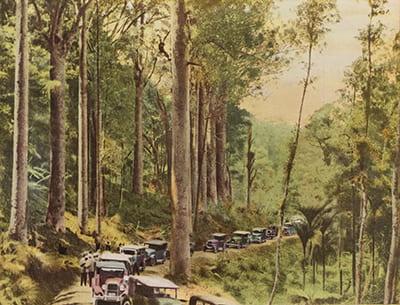 Waipoua Forest,NZ Railways,1937. 4