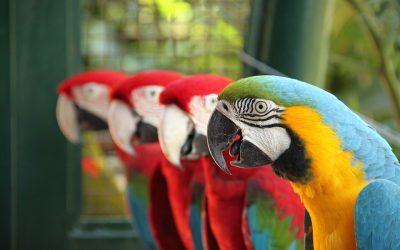 How do Animals Communicate? 🔊