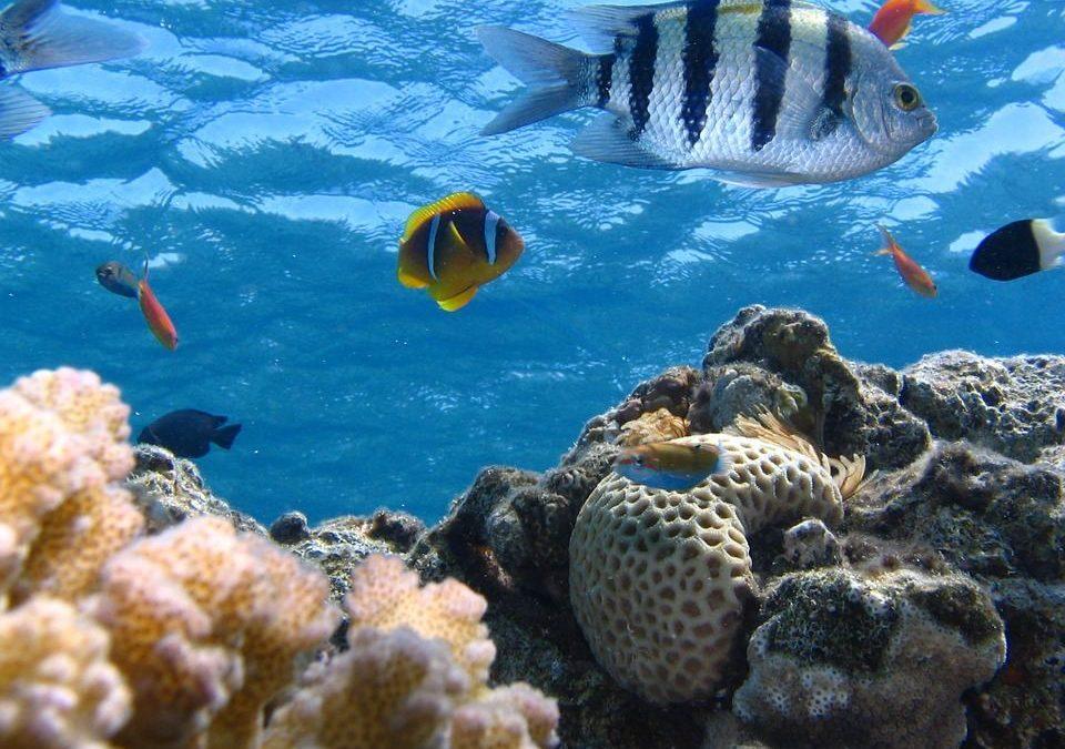 How do we restore marine ecosystems? ▶