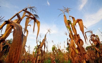 Is climate change the cause of rising world hunger?