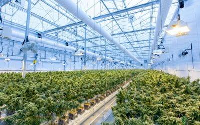 Is Aotearoa ready to legalise cannabis? 🔊