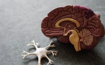 What is motor neuron disease and why is it so deadly?