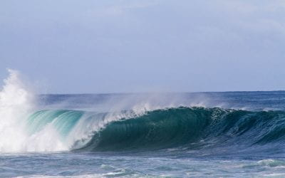 Can we use bio-fouling organisms to help extract energy from waves?