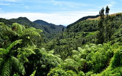How can nature-based forests help combat climate change?