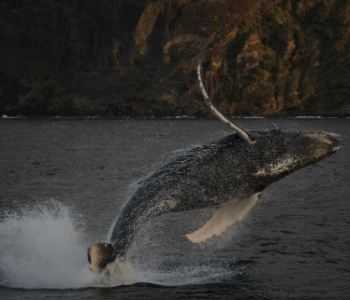 Visualising humpback whale migration