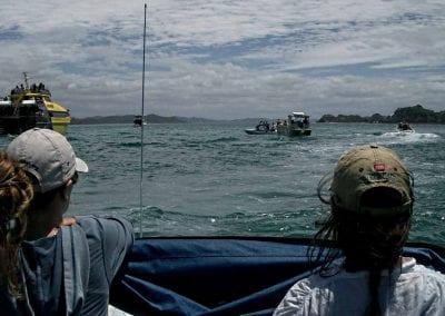 Publishing the Bay of Island Bottlenose dolphin catalogue