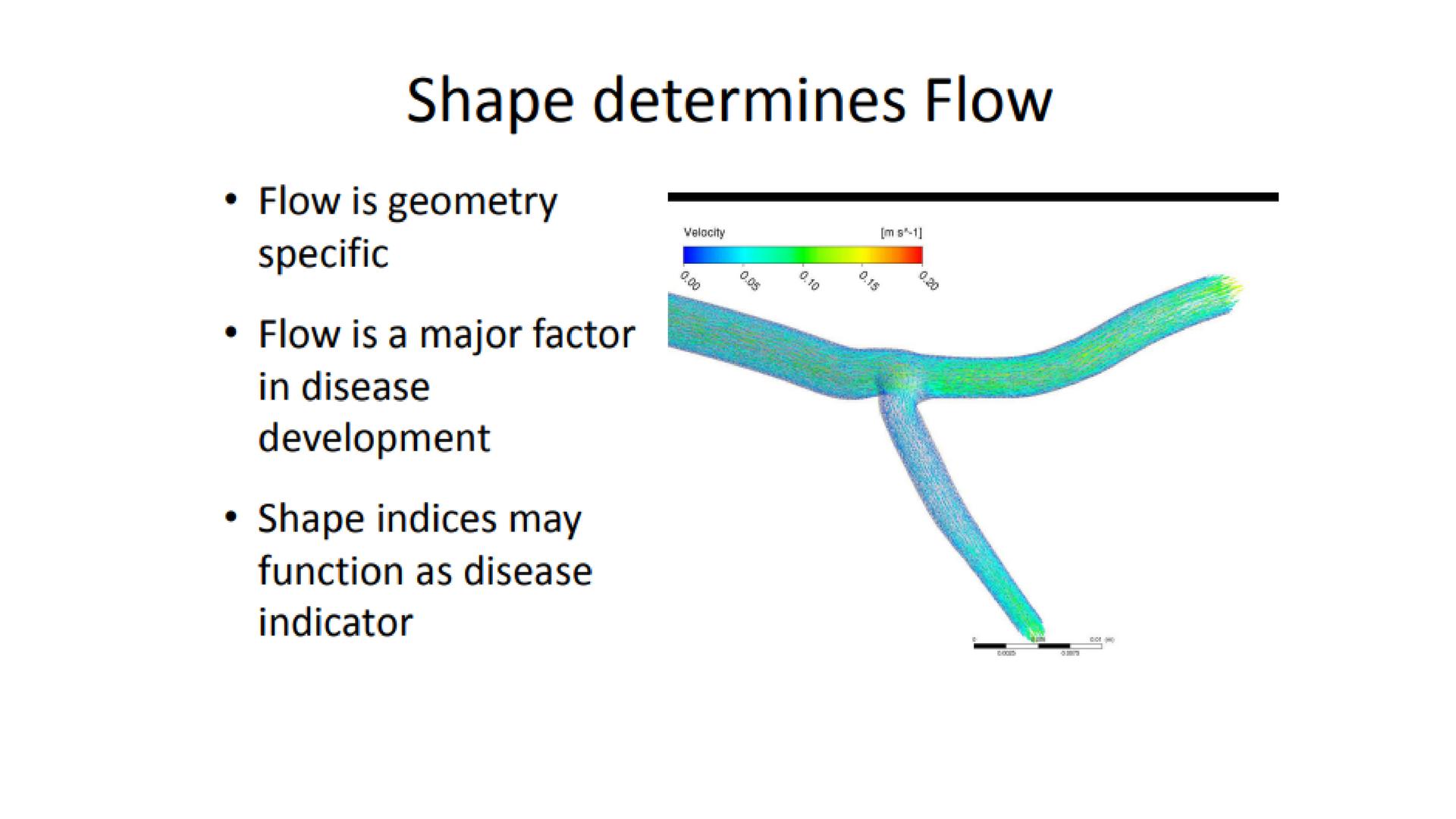 6 - How coronary bifurcation affects flow-1u8qfut