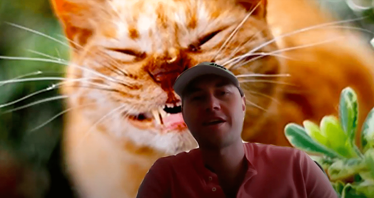 Rhys in a screen recording, pictured with his background set to a funny cat picture