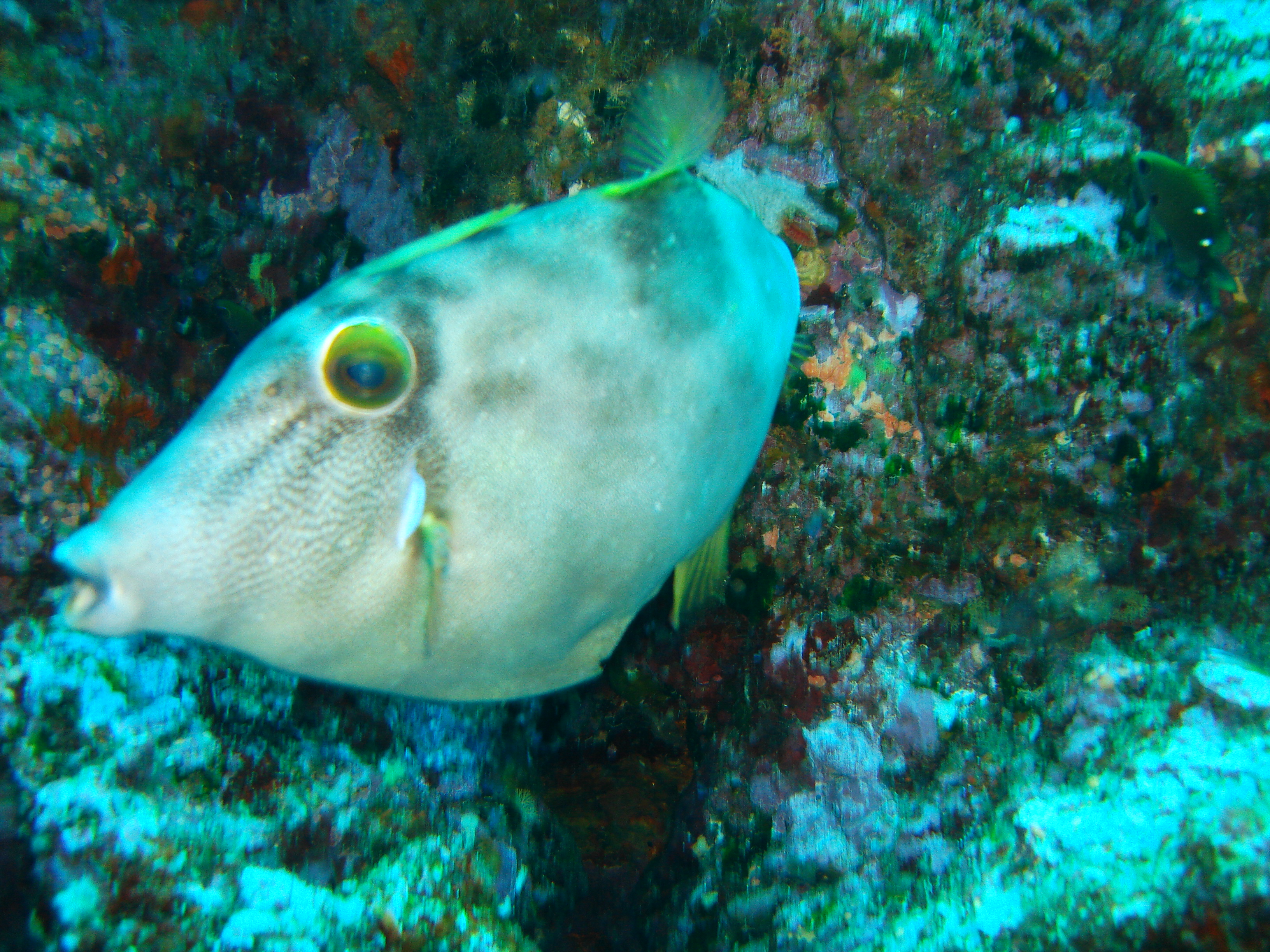 Marine nature conservation must focus on fully-protected reserves, not resource management