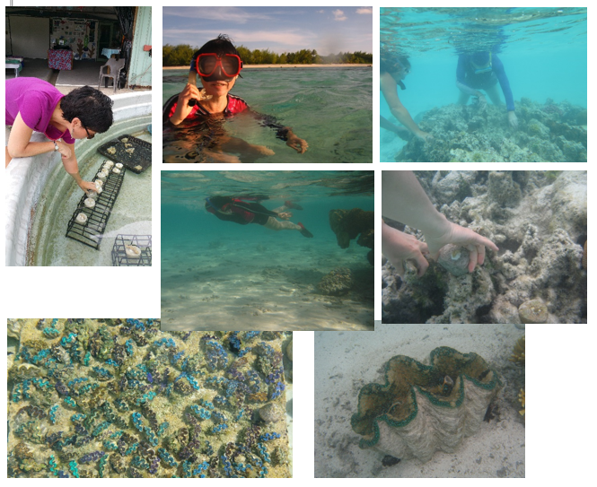 Restoring coral reef ecosystems at Aitutaki, Cook Islands