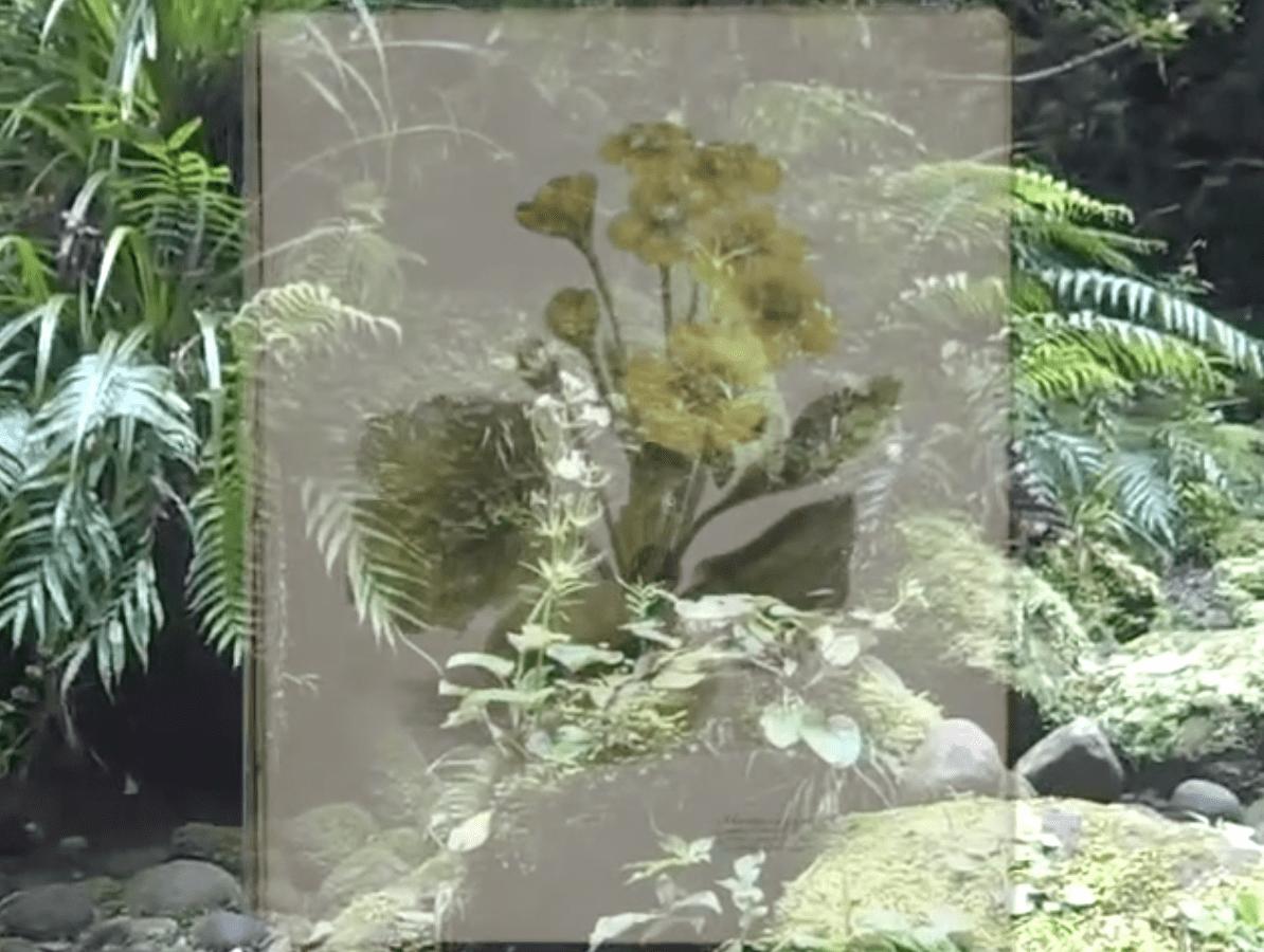 flower illustration ghosted over bush
