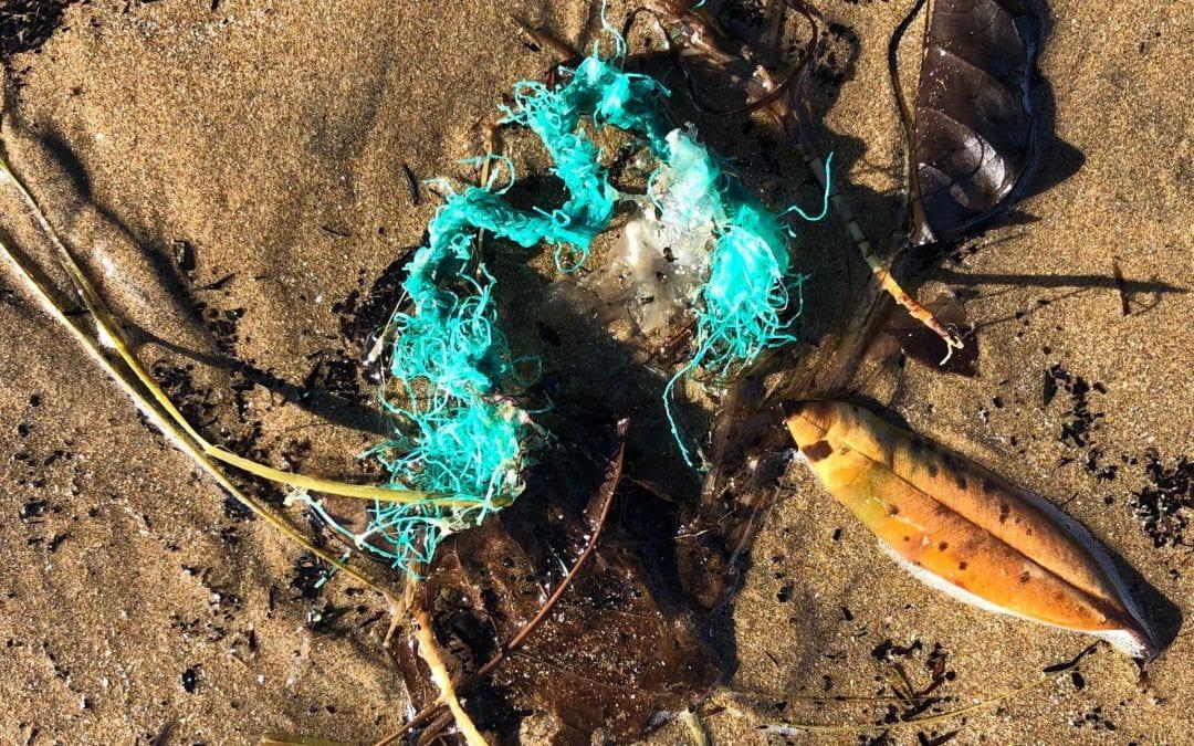 Plastics in the environment: the Royal Society Te Apārangi summarises the evidence