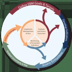 Diagram showing the IEA process.