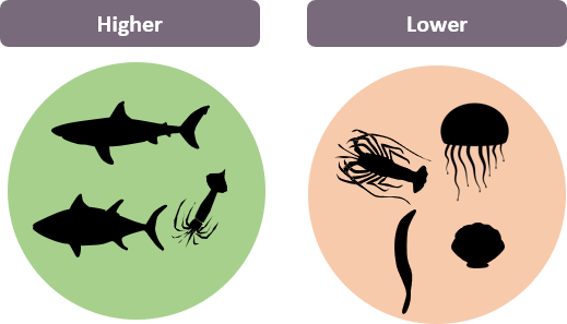 Diagram showing species with a high marine trophic index (e.g. sharks, tuna, squids) vs a lower marine trophic index (e.g. jellyfish, seaweed, shellfish)