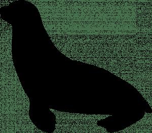 Silhouette of a sea lion