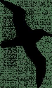 Silhouette of an albatross