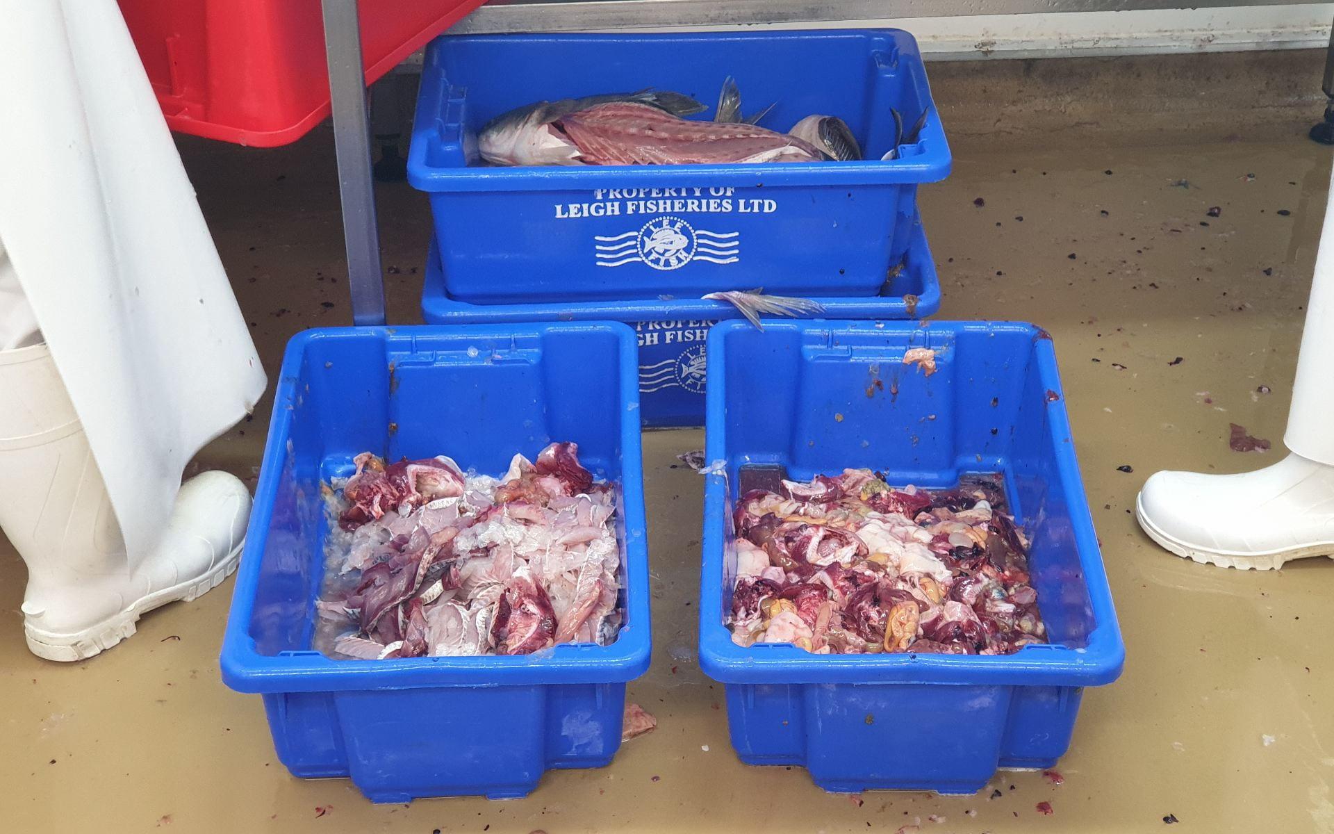 Fish off-cuts in blue bins
