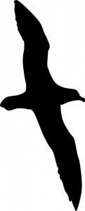 silhouette of a black petrel