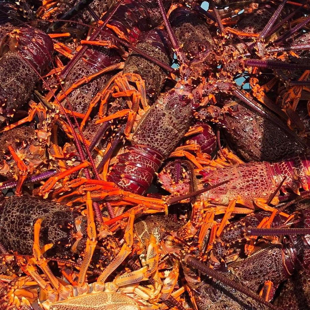 Close up of crayfish