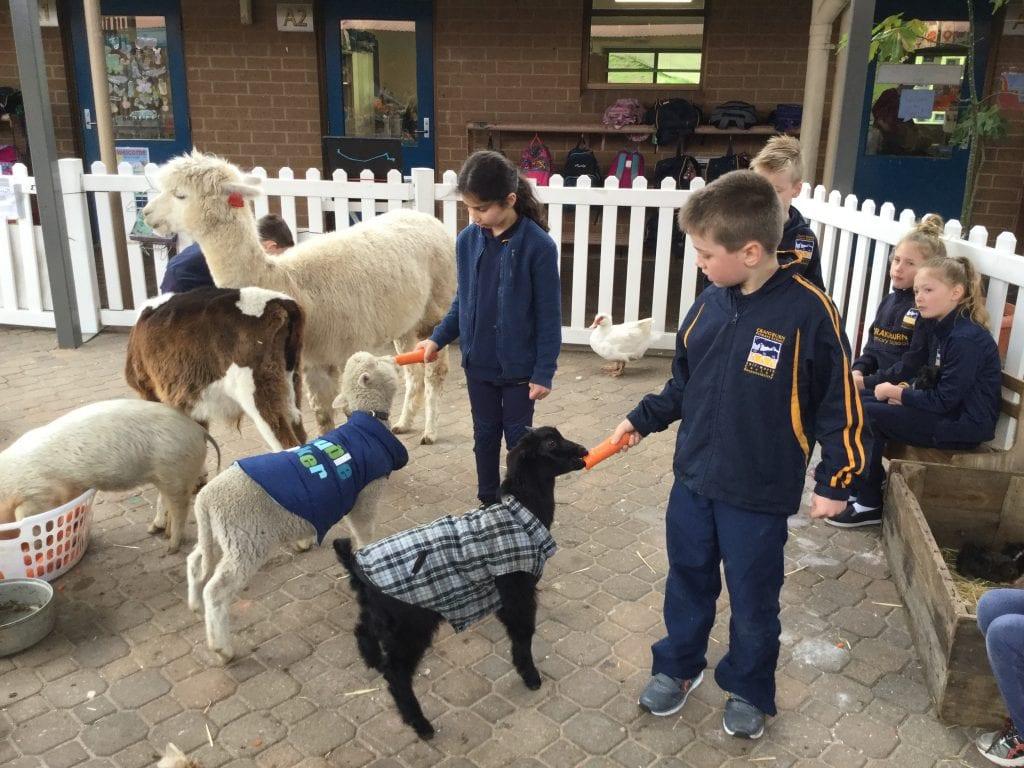 Farmer Darcy's Farm Visit