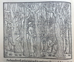 Poliphilo enters a pathless forest (1499)