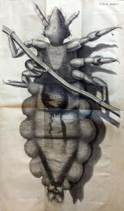 A louse (Schema 35)