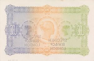Verso colour trail specimen