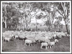 Pastoral scene at Mt Torrens, South Australia, 1947