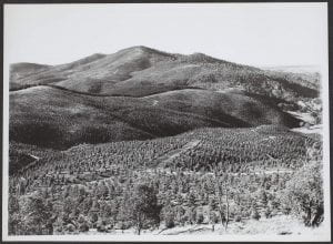 Forestry scene, ACT, c.1943