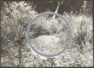 Lyrebird's dancing mound, 1923