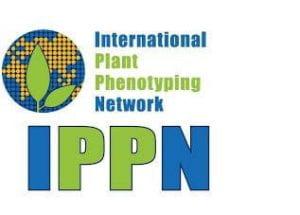 International plant phenotyping network logo