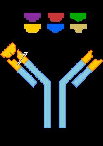 255px-Antibody