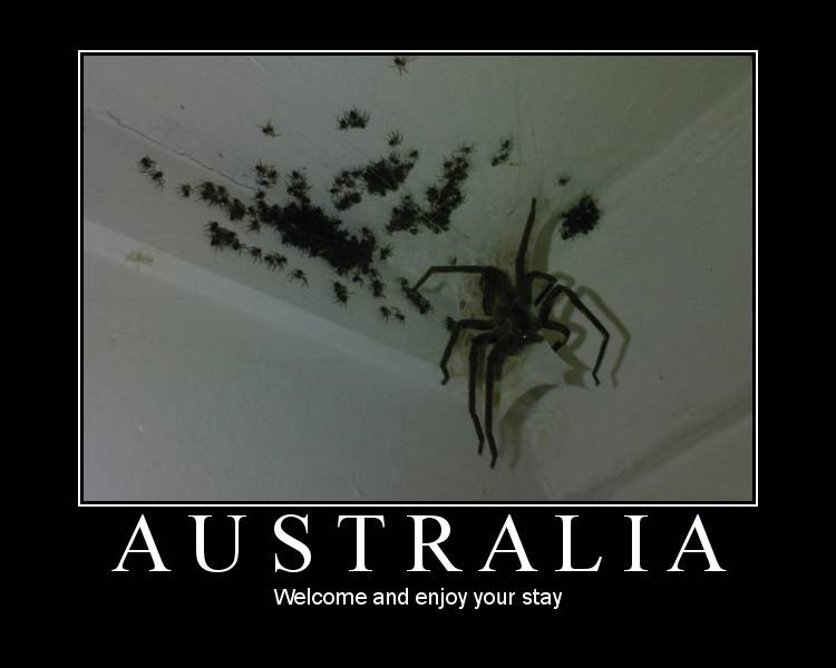 Australian Spiders Theyre Not So Bad Scientific Scribbles