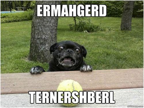 dog-meme-berks