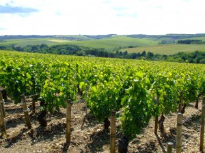 The vineyards of Chablis, France. (Image taken by Peter Curbishley - Flickr)