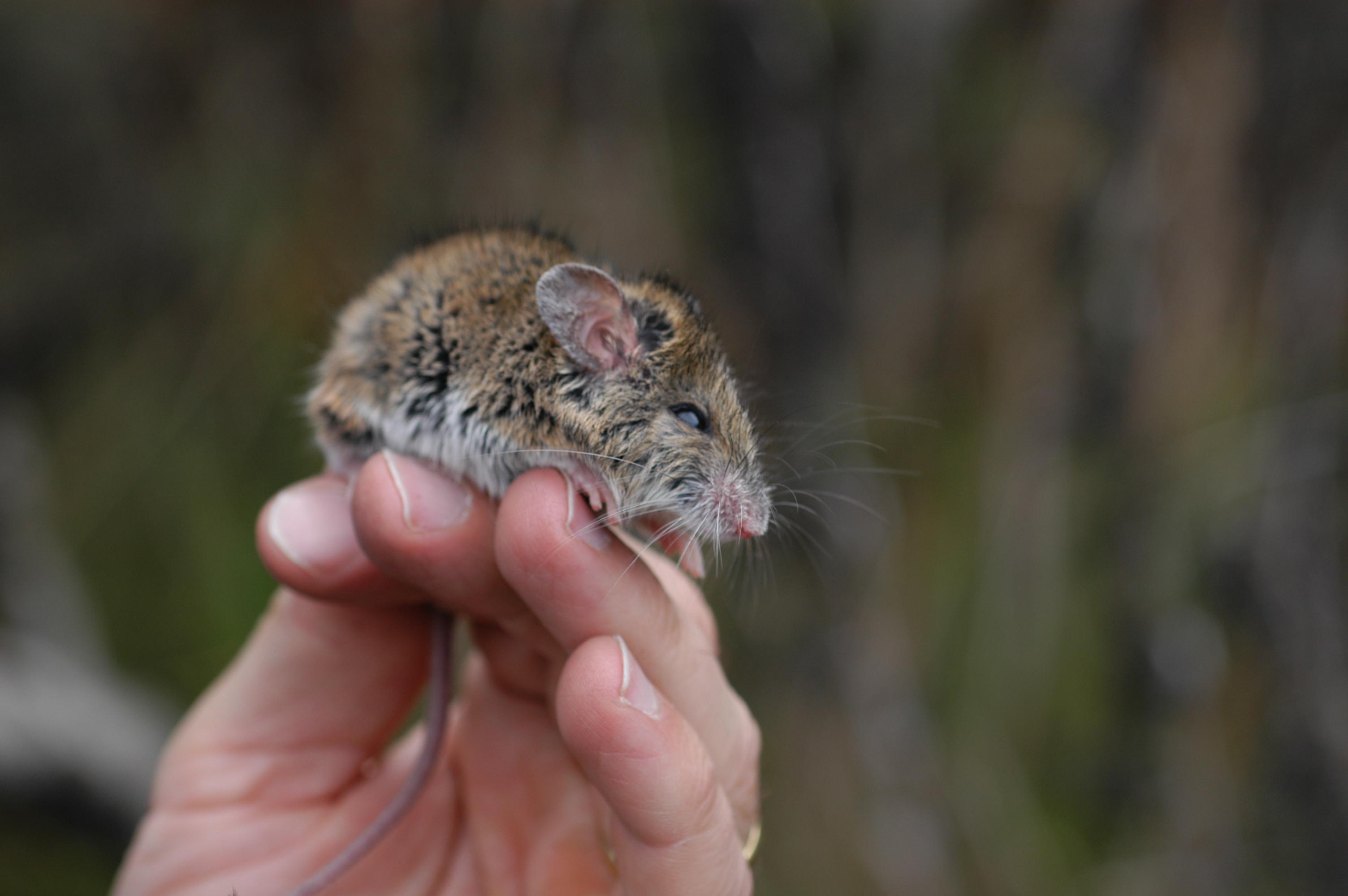 Saving 'Ugly' Aussie Animals – Scientific Scribbles