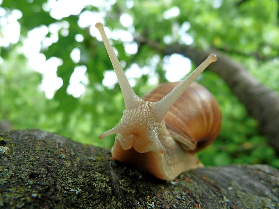 cute-snail