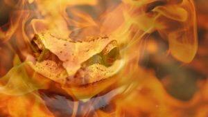 Frog in fire