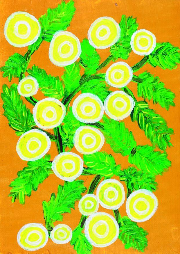 Kathrine 'Kat' Clarke (b. 1988) Gukwonderuk (Wotjobaluk) or Old Man's Weed (Centipeda cunninghamii), 2018 acrylic and pencil on canvas 20.4 × 14.7 cm MHM2018.22, Medical History Museum © Kathrine Clarke.
