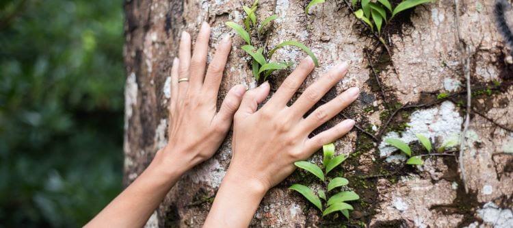 Hands touching tree