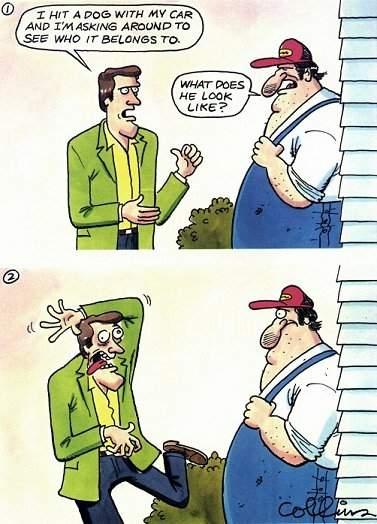 farmersdog